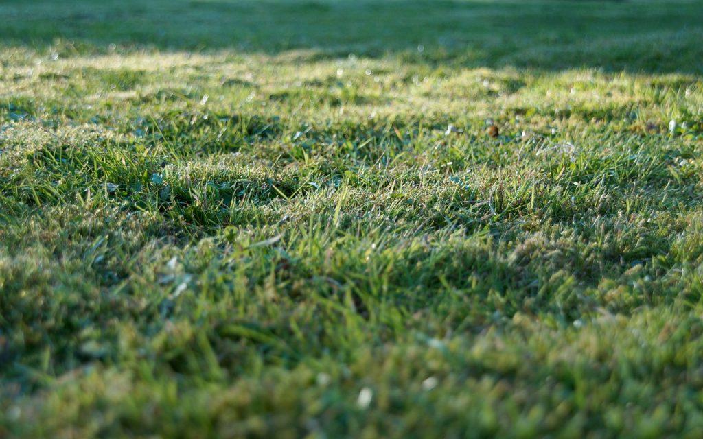 grass-905179_1280