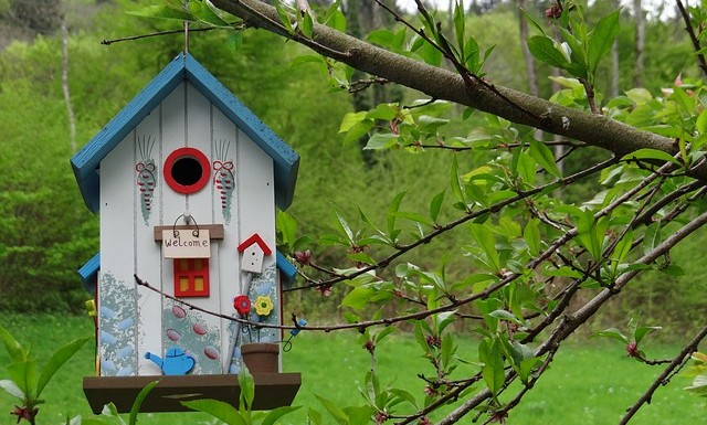 Having Your Own Nest-Box In Your Backyard…