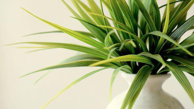 How To Keep Your Indoor Plants Happy…