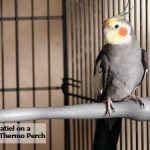 Heat Perches - Keep Pet Birds Warm