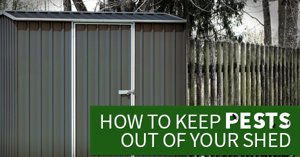 How to Keep Pest Out of Your Shed