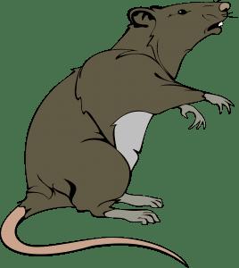 rat-295035_1280