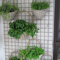 Garden Gift Ideas - vertical garden