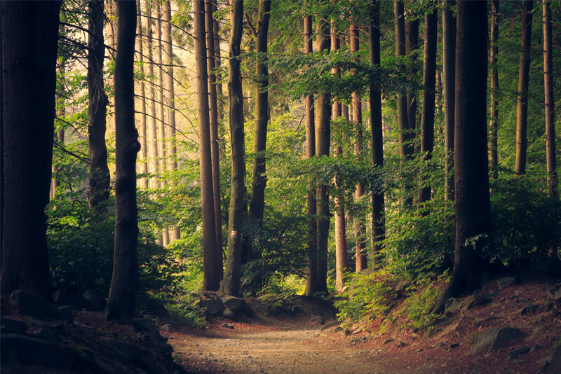 Be Part of the National Tree Day on July 31st