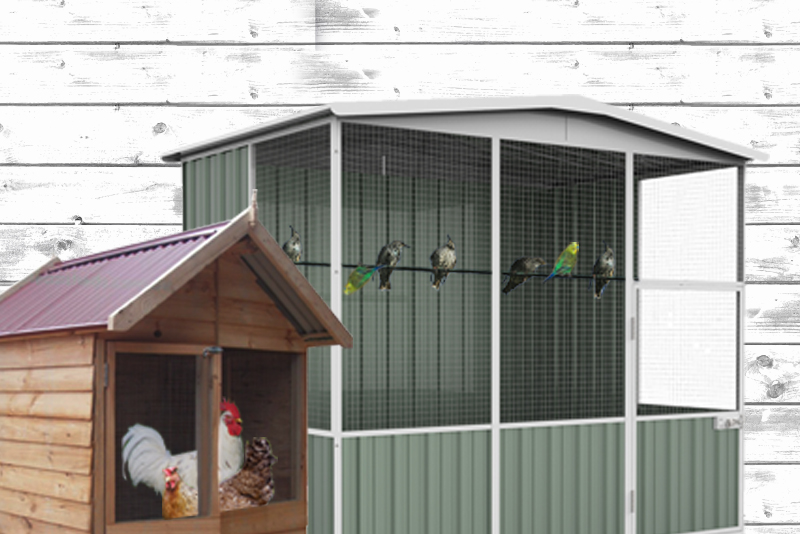 How to Choose an Aviary - chicken coop