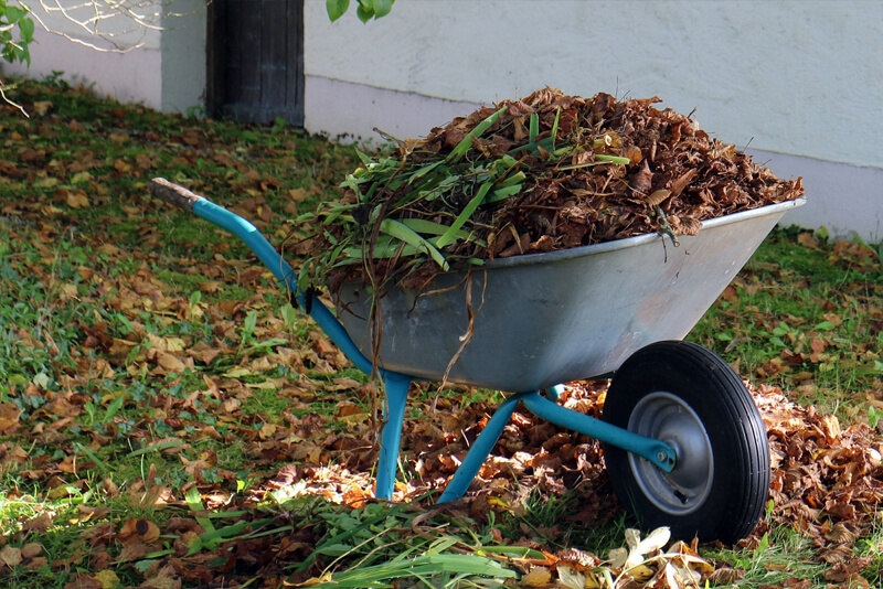 Autumn Chores to Work on In Your Backyard
