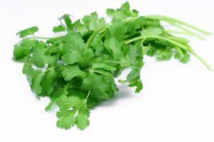 veggies - Coriander
