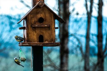 Having Your Own Nest Box In Your Backyard