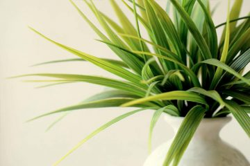 How To Keep Your Indoor Plants Happy