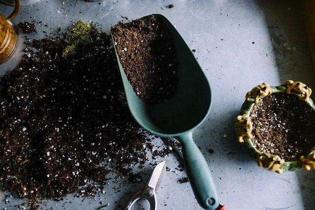 indoor plants - potting mix