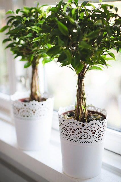 indoor plants - enough sunshine