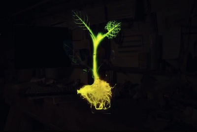 backyard invention - glowing plant