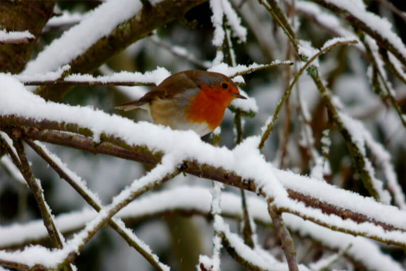 Tips on How to Keep Pet Birds Warm in Winter