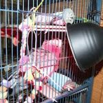 Keep Pet Birds Warm - Heat Lamps