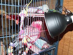 Bird Heat Lamp