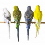 Keep Pet Birds Warm- Put Birds Together