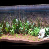 Garden Gift Ideas - terrarium