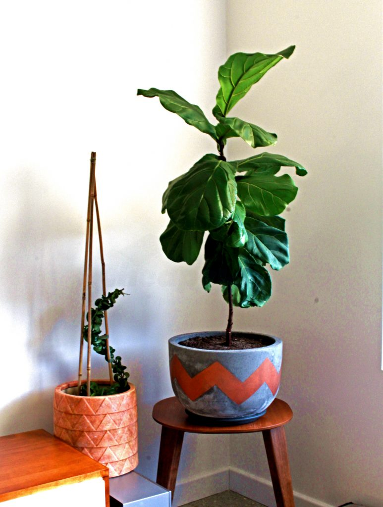 Crazy Plant Lady - common house plant