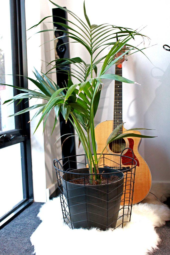 Crazy Plant Lady - best decors ever