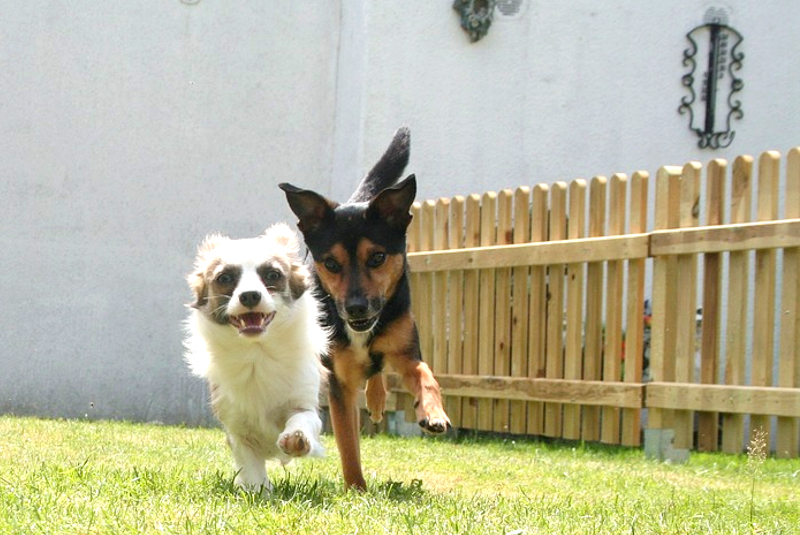New Fence - Pet's safety