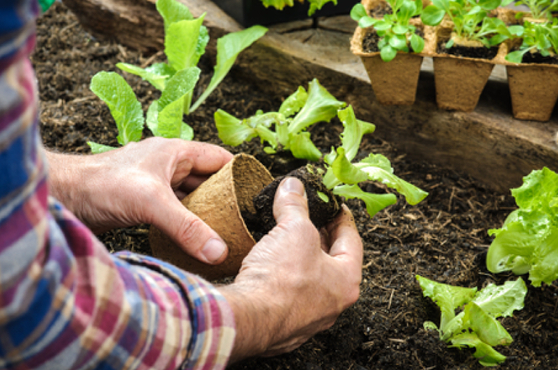 gardening is good for your health - growing food