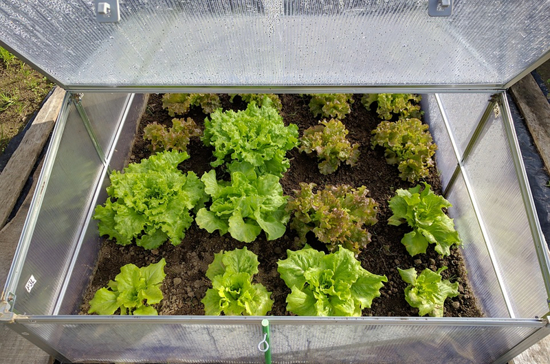 grow organic vegetables - protect from harsh sunlight