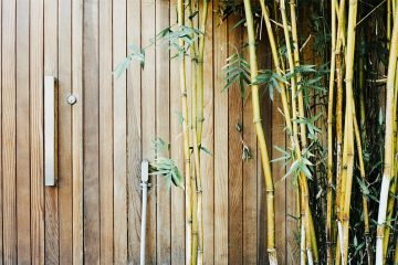 How to Create Privacy in Your Small Backyard Garden