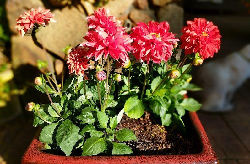 summer - Plant flowers