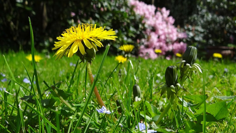 Simple Ways to Freshen up Your Garden for Summer