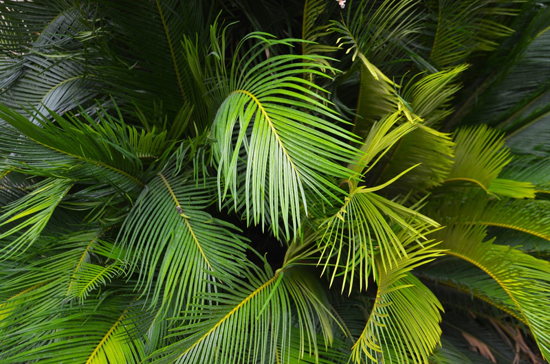 Garden Designs - tropical
