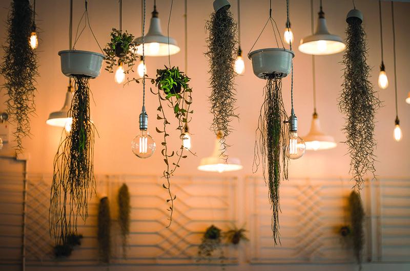 Indoor Garden - hanging pots